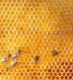 Células y abejas de la miel Fotografía de archivo libre de regalías