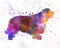 Clumber Spaniel in watercolor Royalty Free Stock Photos