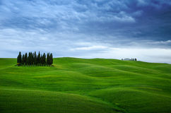 Clump of Cyprysses in Tuscany. Photo shows clump of cyprysses on fields of grass in Tuscany. Overcast, little dark and romantic clouds, grass softly illuminated Stock Images