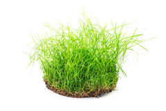 Clump of grass  Stock Photos