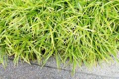 Clump of grass in garden Royalty Free Stock Photos
