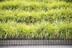 Clump of grass in garden Stock Images