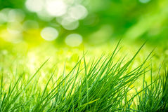 Clump of Grass Royalty Free Stock Photos