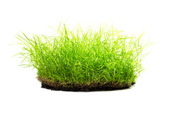 Clump of grass isolated Stock Photography