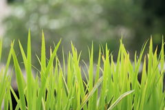 Clump of grass Stock Images