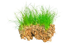 A clump of grass Stock Photography