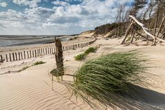 Green grass on the dune. A clump of green bush grows on the dune that gradually buries the coastal forest in the bay of Authie, Berck-plage Royalty Free Stock Photo