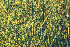 Clump of high grass Royalty Free Stock Images