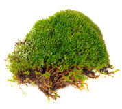 Clump of Moss Close-Up Isolated on White Background Stock Photography