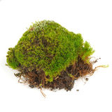 Clump Of Green Moss Isolated On White Background Royalty Free Stock Image