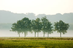 Clump of trees Stock Photography