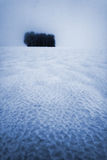Clump of Trees in Winter. A cluster of windswept trees stand out in the distance on an otherwise flat, wide open field covered with frozen snow.  Vertical Stock Images