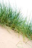 Clumps of sea grass Royalty Free Stock Photo