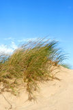 Clumps of sea grass Stock Photography