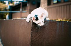 Clumsy cat playing near the train Stock Images