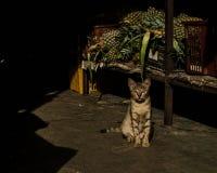 Clumsy Cat. Waiting infront the market door Stock Photos
