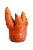 Clumsy ripe carrot Stock Photos