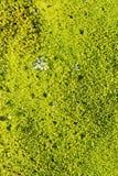 Cluseup mossa i Norge Royaltyfri Fotografi
