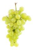 cluste葡萄白色 免版税库存图片