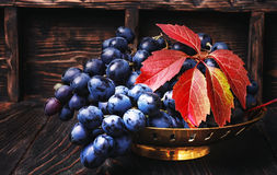 Cluster of autumn grape Stock Images