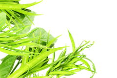 Cluster bean or guar been indian vegetable in white background Stock Images