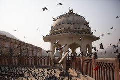 A Cluster of birds in front of Amber fort Stock Images