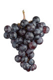Cluster of blue grape Stock Photo