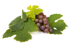 Cluster of blue grapes Royalty Free Stock Photos