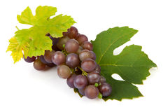 Cluster of blue grapes Royalty Free Stock Photo