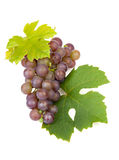 Cluster of blue grapes Royalty Free Stock Photography