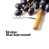 Cluster of blue grapes with corkscrew isolated on white background. Stock Image