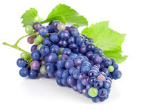 Cluster blue grapes with green leaf Stock Photography