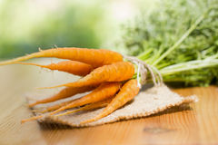 Cluster of carrots. The carrots gathered in a garden with a tops of vegetable. Small by the size, sweet.Contains vitamin A and useful microcells.Shot in natural Royalty Free Stock Photos