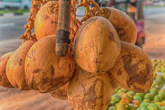 Cluster of coconuts Royalty Free Stock Image