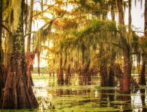 Southern Solace Stock Photos