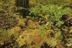Ferns in autumn forest. Stock Images