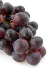 Cluster of fresh blue grapes Royalty Free Stock Photography