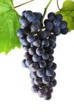 Cluster fresh grape Stock Image