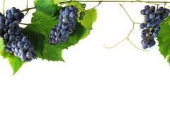 Cluster fresh grape Royalty Free Stock Image