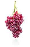 Cluster fresh grapes ripe fruit Stock Images