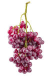 Cluster fresh grapes ripe fruit Stock Photos