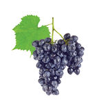 Cluster fresh juicy organic grapes with green Royalty Free Stock Photography