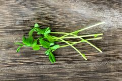 Cluster of fresh pea shoots over rustic wood Royalty Free Stock Image