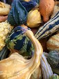 Gourds. Colorful gords. Many different shapes. Stock Photo