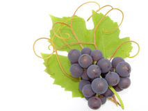 Cluster of a grapes. On a background of a green sheet and tendril Royalty Free Stock Image
