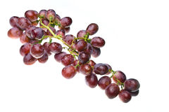 Cluster of grapes Stock Photography