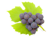 Cluster of a grapes Stock Photo