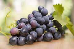 Cluster of grapes. Ripe are useful to health, contain the vitamins and minerals strengthening immunity Royalty Free Stock Photo