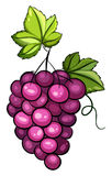 A cluster of grapes. On a white background royalty free illustration