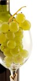 Cluster of grapes in the wineglass. Against the wine battle Royalty Free Stock Images